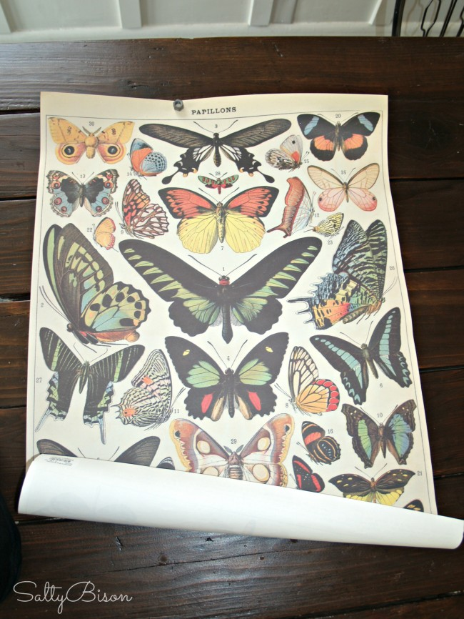 Papyrus Butterfly Paper