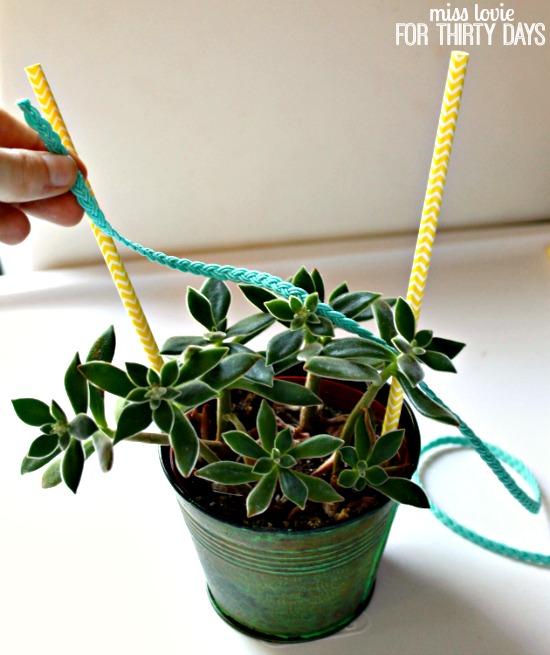 02 Succulent Planter Housewarming Gift