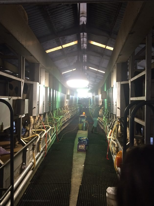 CA Milk Advisory Board Farm Tour - on the farm  Thirty Handmade Days
