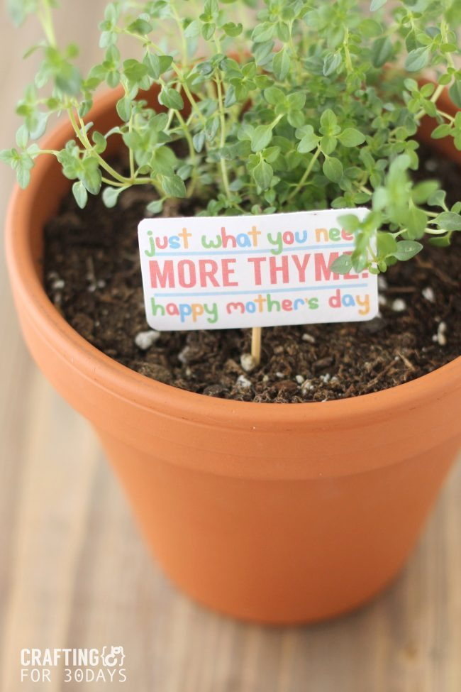 THYME_GIFT_2