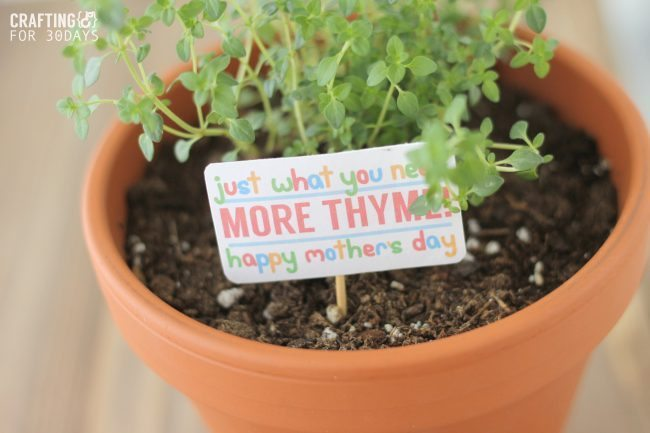 THYME_GIFT_3