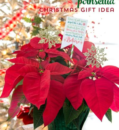 Poinsettia Christmas Gift with cute free printable included