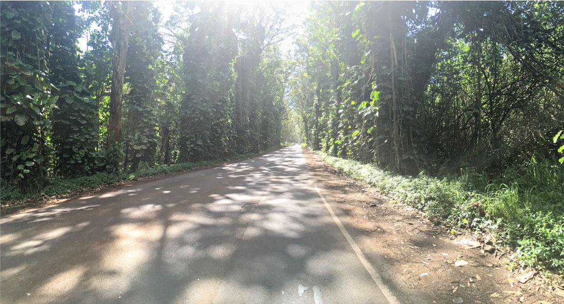 Travel - Things to do in Kauai - Tunnels Road