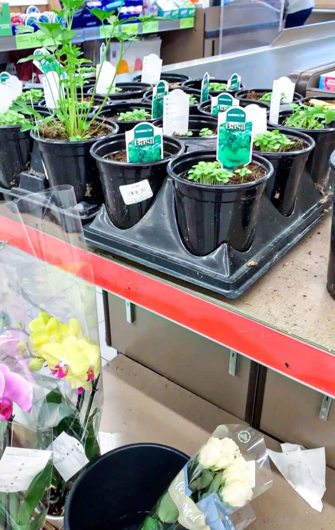 Aldi plants
